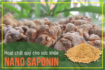 Nano Saponin Tam Thất – hoạt chất quý cho sức khỏe chẳng kém gì Nhân sâm