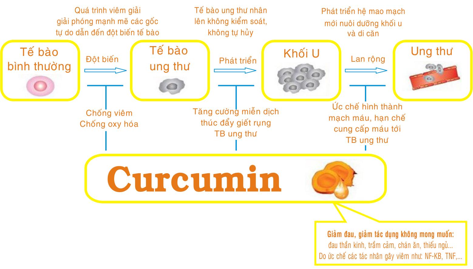 Cơ chế chống ung thư của hợp chất Curcumin trong củ Nghệ 1